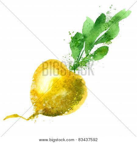 Turnip vector logo design template. vegetable or food icon.