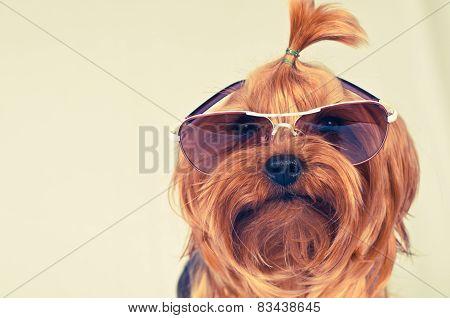 Cute Dog In Pink Sunglasses