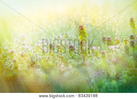 Morning dew in meadow