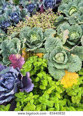 Colorful Summer Vegetable Garden