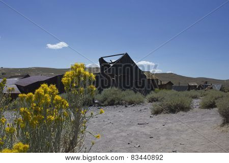 Bodie Ghost town and flowers