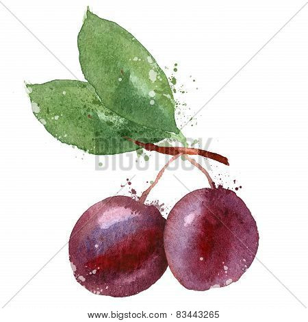 Plum vector logo design template. fruit or food icon.