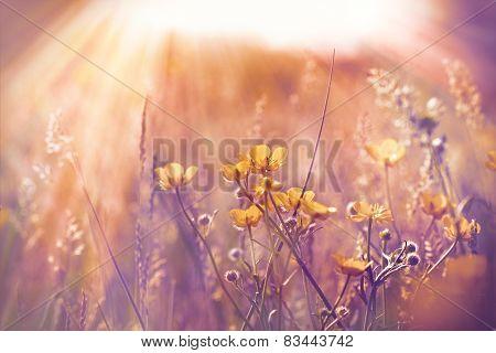 Little yellow flowers in meadow