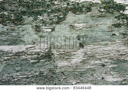 Texture Of Old Bark Wood