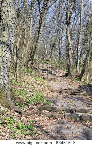 Paved Forest Pathway