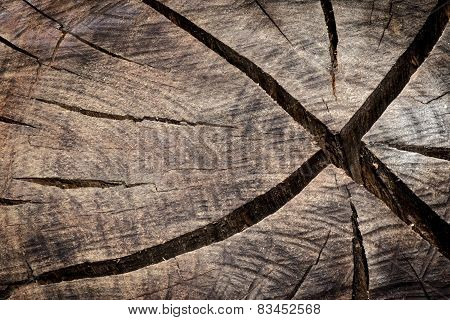 Trunk Cutted Texture