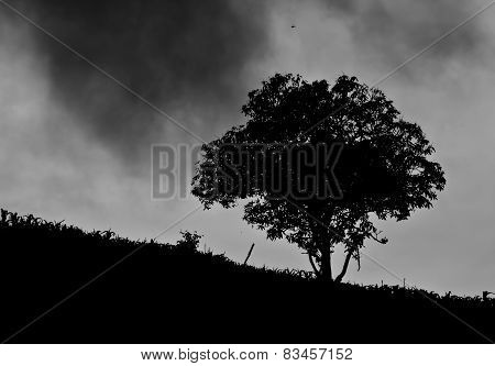 A mature old  tree spreads its branches out on a country slope