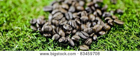 Coffee Beans On Grass
