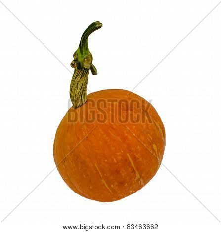Big Fancy Yellow Pumpkin Isolated On White Background