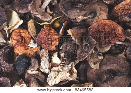 Dried Mushrooms Background