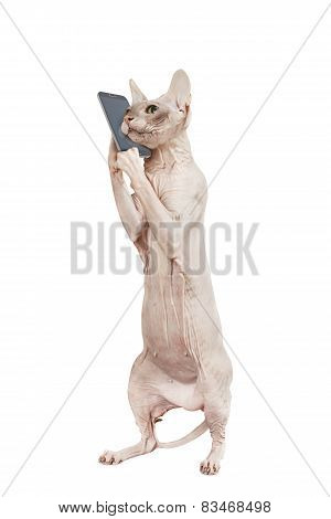 Cat At Phone