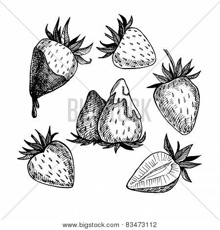 Hand-drawn Vector Illustration. Collection Of Strawberry. Line Art. Isolated On White Background.
