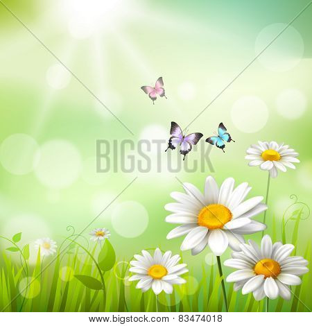 Daisies Summer Background