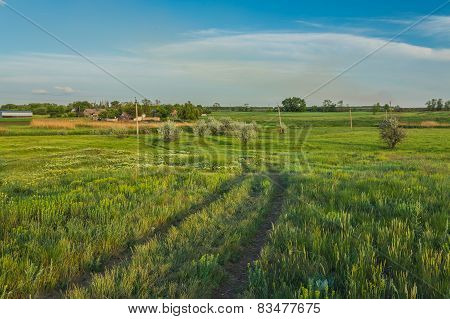 Summer landscape with green grass and road