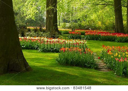 spring flowers in holland park