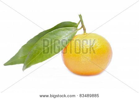 Mandarin or Tangerine fruit on white background
