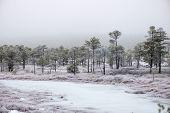 pic of frostbite  - snowy landscape in frosty winter bog in country side - JPG