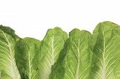 foto of leafy  - green leafy kale vegetable isolated on white studio background - JPG