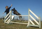stock photo of shepherds  - jumping Dutch Shepherd Dog in a training of agility - JPG