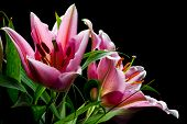 picture of white lily  - Bouquet of pink lilies with white - JPG