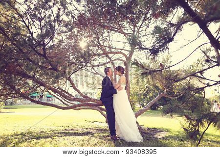 Bride And Groom Sitting In A Tree