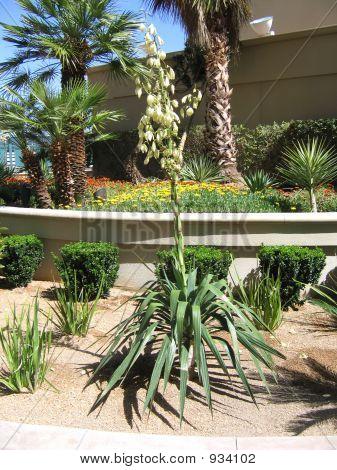 Rooftop Desert Garden