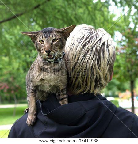 cat sit on the shoulder