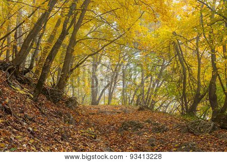 Mystical place in autumnal forest