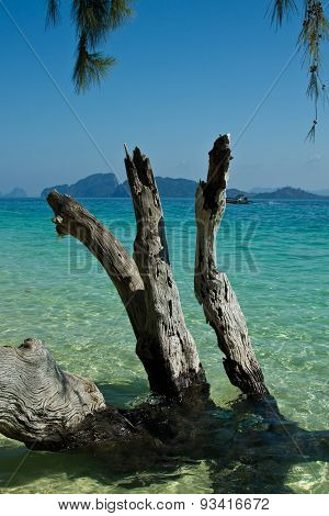 Dead Tree In Water The Beach  Thailand