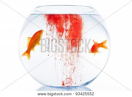 Goldfish couple in unhealthy home