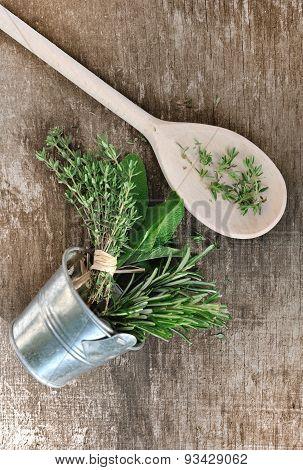 Aromaric Herbs
