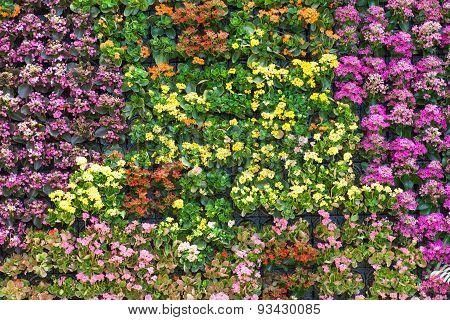 Close - up Beautiful flower wall background