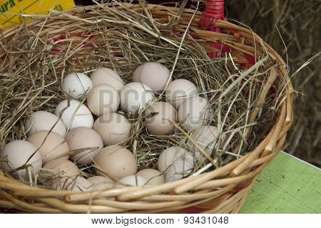 Organic Chicken, Hen Eggs