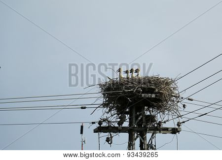 Stork's nest on a lamppost