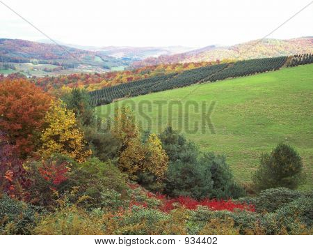 Christmas Tree Farm In Fall