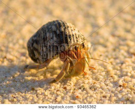 Alive Shell Mobile Homeowner