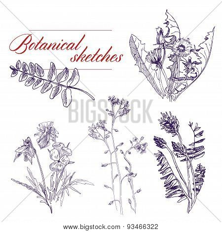 Botanical Flowers