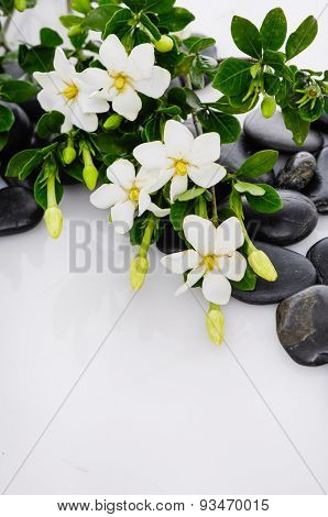 Lying down gardenia on black pebbles