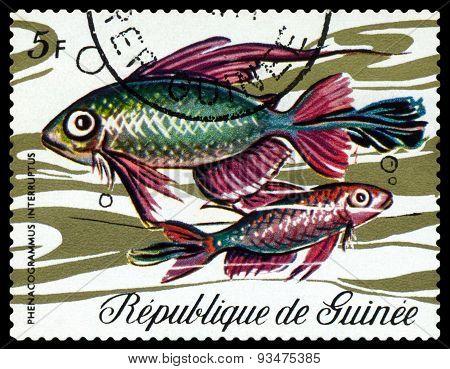 Vintage  Postage Stamp. Fish Phenacogrammus Interruptus.