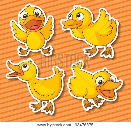 Cute ducklings in four different positions