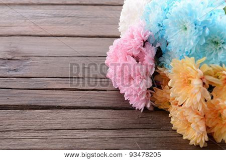 Colorful chrysanthemum on wooden background