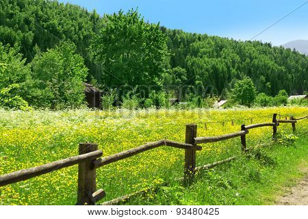 Wooden fence along beautiful meadow over mountain with grove of green trees