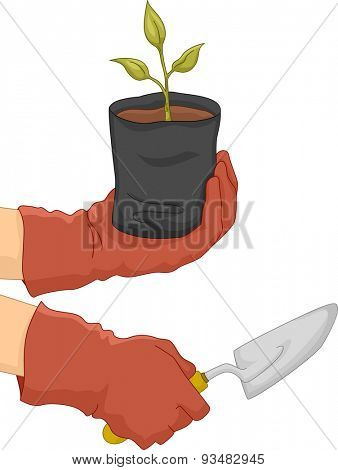 Illustration of a Gardener Holding a Sapling in One Hand and a Spade in the Other