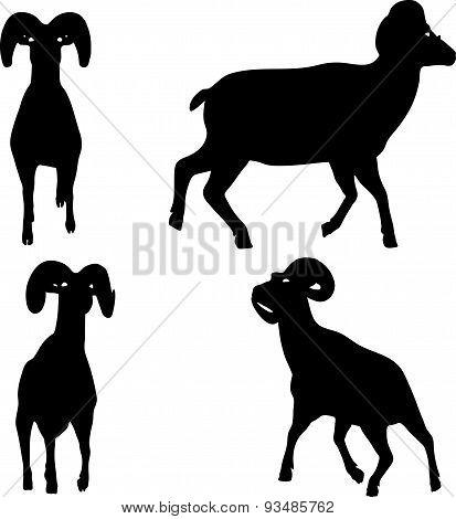 Big Horn Sheep  Silhouette In Walking  Pose
