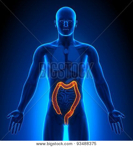 Medical Imaging - Male Organs - Colon
