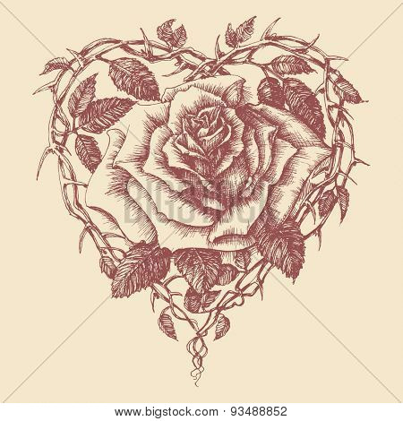 Heart rose vector illustration