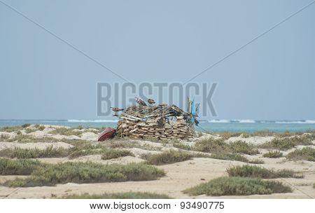 Three Ospreys On Top Of A Stone Hut