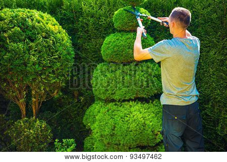 Topiary Trimming Plants