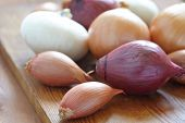 image of red shallot  - Red - JPG