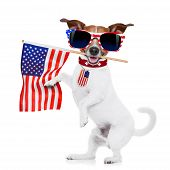 pic of usa flag  - jack russell dog holding a flag of usa on independence day on 4th of july with mouth isolated on white background wearing american sunglasses - JPG